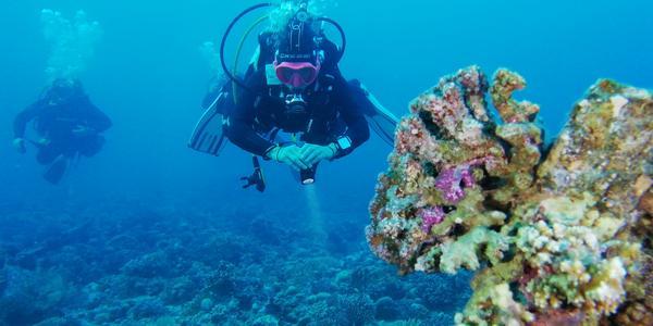 Crociera subacquea nel Mar Rosso del sud, St. Johns: 12/12/2019 - 19/12/2019